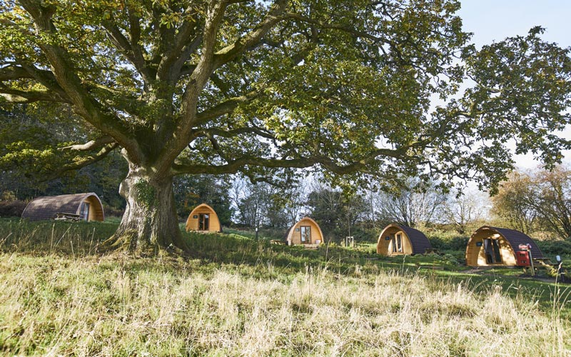 Glamping pods at Whitemead Forest Park